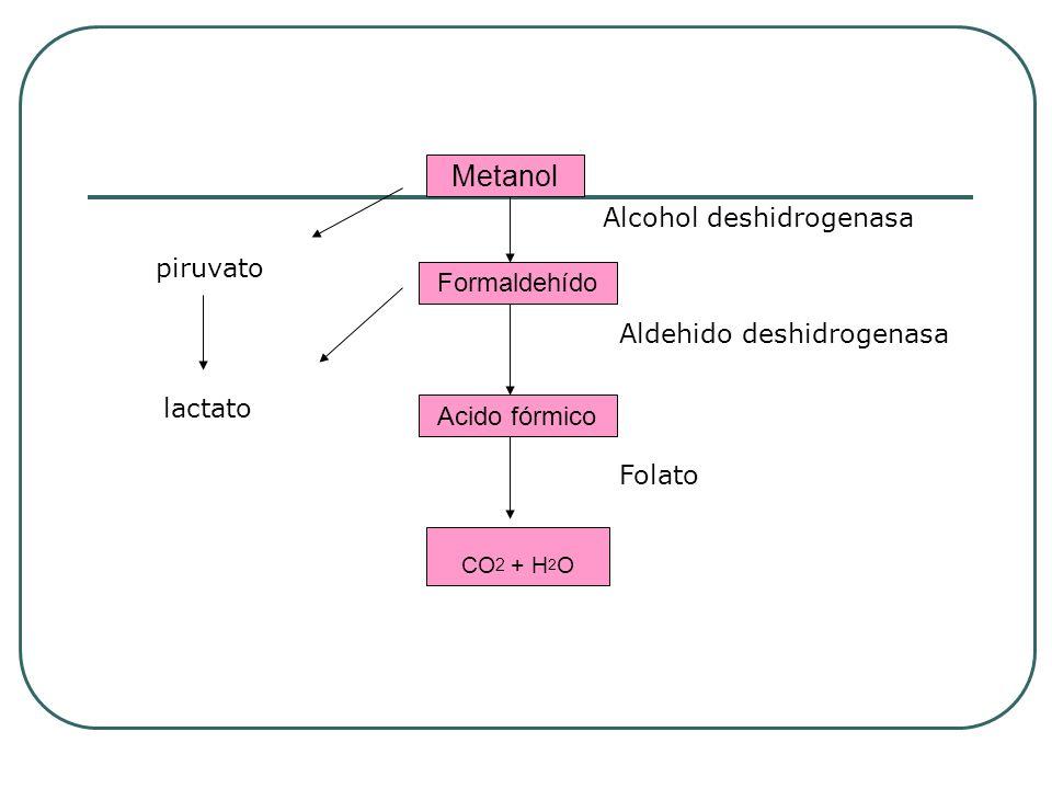 Metanol Formaldehído Acido fórmico CO 2 + H 2 O Alcohol deshidrogenasa Aldehido deshidrogenasa Folato piruvato lactato