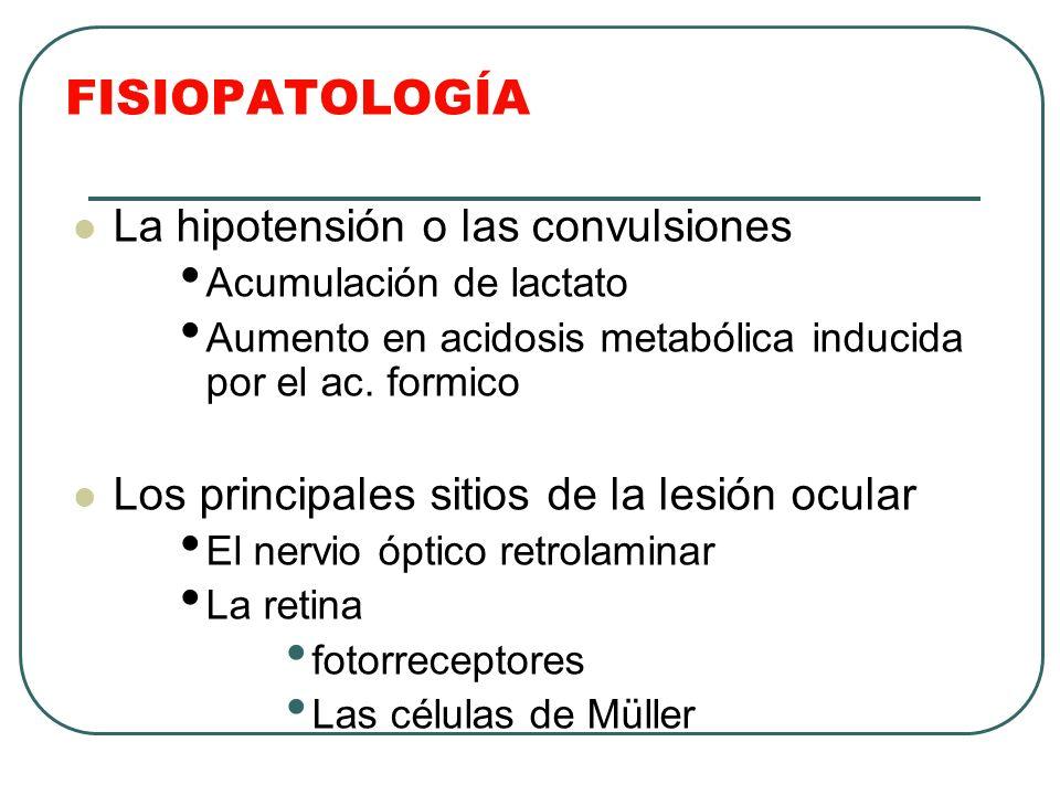 FISIOPATOLOGÍA La hipotensión o las convulsiones Acumulación de lactato Aumento en acidosis metabólica inducida por el ac. formico Los principales sit