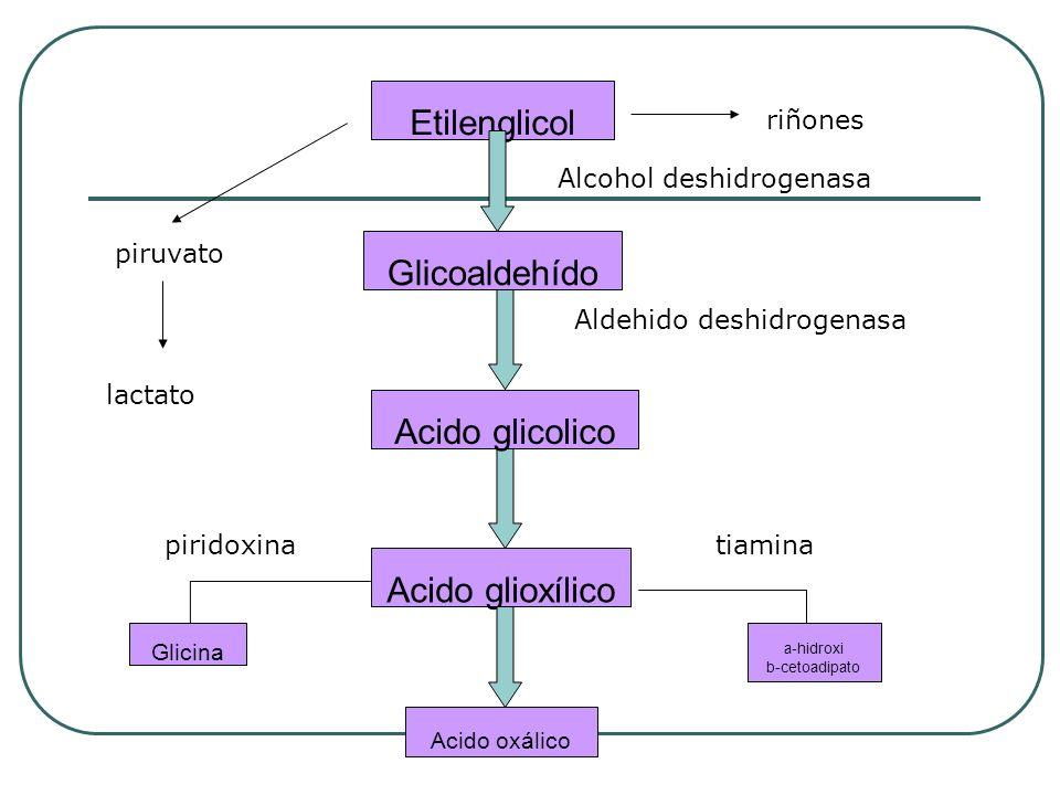 Etilenglicol Glicoaldehído Acido glicolico Acido glioxílico Glicina a-hidroxi b-cetoadipato Acido oxálico riñones Alcohol deshidrogenasa Aldehido desh