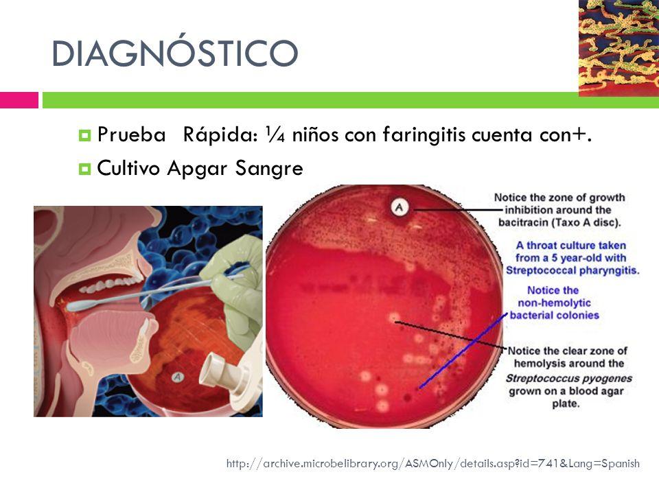 DIAGNÓSTICO Prueba Rápida: ¼ niños con faringitis cuenta con+. Cultivo Apgar Sangre http://archive.microbelibrary.org/ASMOnly/details.asp?id=741&Lang=