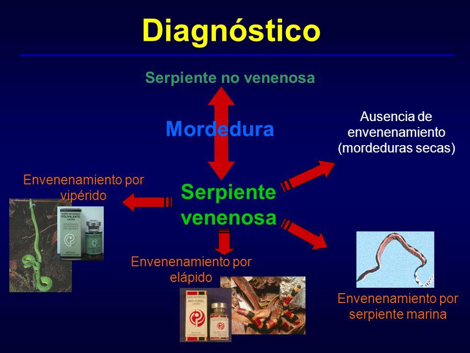 Diagnóstico Serpiente no venenosa Serpiente venenosa Ausencia de envenenamiento (mordeduras secas) Envenenamiento por vipérido Envenenamiento por eláp