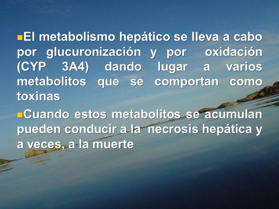 El metabolismo hepático se lleva a cabo por glucuronización y por oxidación (CYP 3A4) dando lugar a varios metabolitos que se comportan como toxinas E
