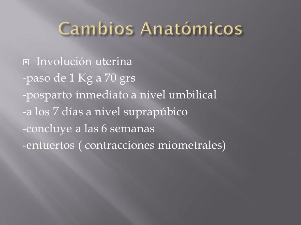 Involución uterina -paso de 1 Kg a 70 grs -posparto inmediato a nivel umbilical -a los 7 días a nivel suprapúbico -concluye a las 6 semanas -entuertos