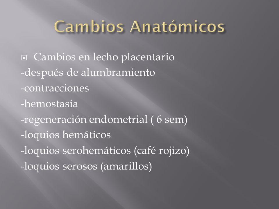 Cambios en lecho placentario -después de alumbramiento -contracciones -hemostasia -regeneración endometrial ( 6 sem) -loquios hemáticos -loquios seroh