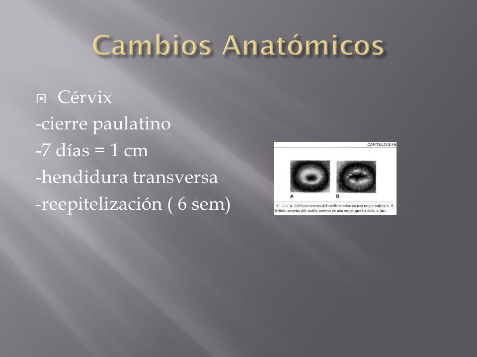 Cérvix -cierre paulatino -7 días = 1 cm -hendidura transversa -reepitelización ( 6 sem)