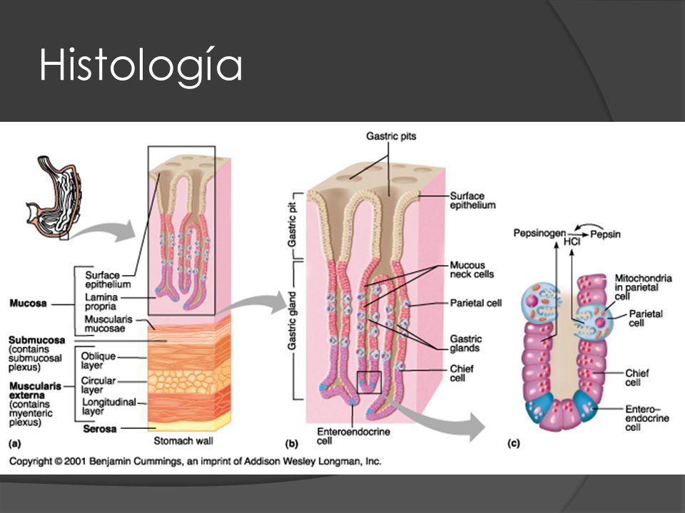 Microbiología Bacilo espiralado Gramnegativo y microaerofílico.