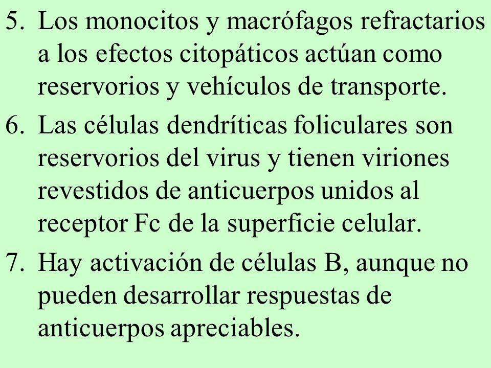 5.Los monocitos y macrófagos refractarios a los efectos citopáticos actúan como reservorios y vehículos de transporte. 6.Las células dendríticas folic