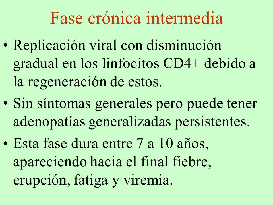 Fase crónica intermedia Replicación viral con disminución gradual en los linfocitos CD4+ debido a la regeneración de estos. Sin síntomas generales per