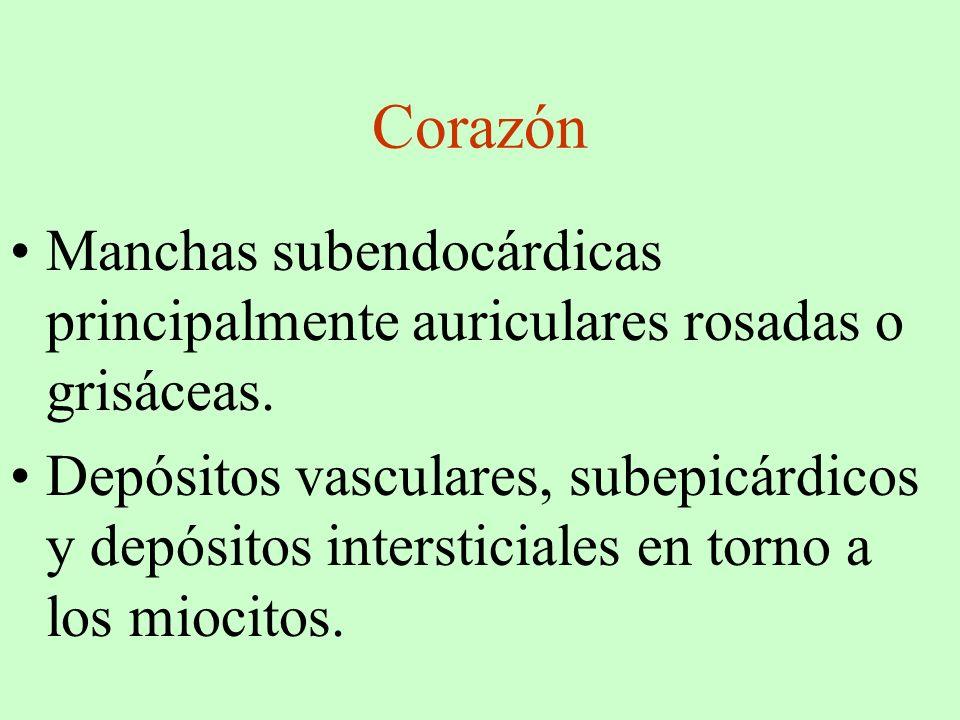 Corazón Manchas subendocárdicas principalmente auriculares rosadas o grisáceas. Depósitos vasculares, subepicárdicos y depósitos intersticiales en tor