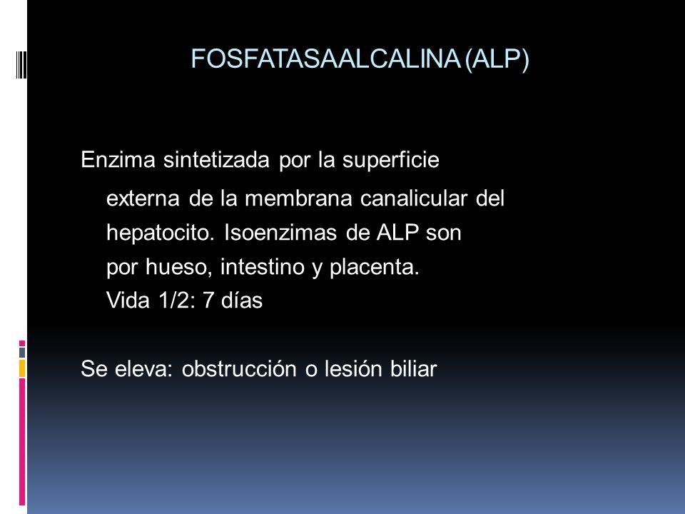 FOSFATASA ALCALINA (ALP) Enzima sintetizada por la superficie externa de la membrana canalicular del hepatocito. Isoenzimas de ALP son por hueso, inte