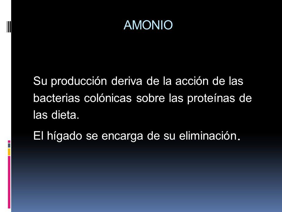AMONIO Su producción deriva de la acción de las bacterias colónicas sobre las proteínas de las dieta. El hígado se encarga de su eliminación.