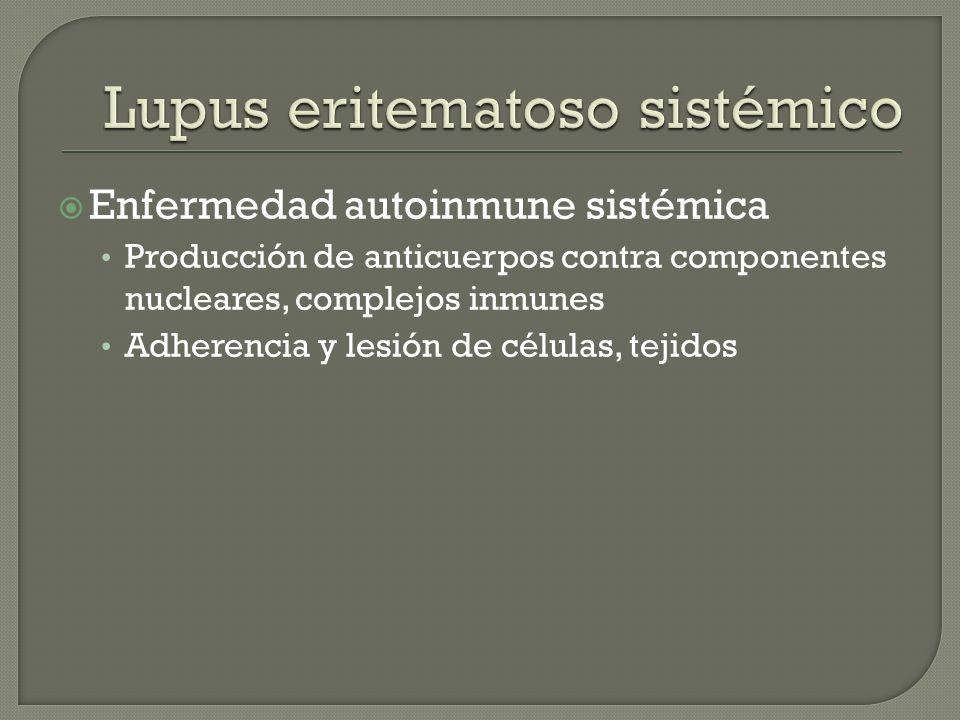 Enfermedad autoinmune sistémica Producción de anticuerpos contra componentes nucleares, complejos inmunes Adherencia y lesión de células, tejidos