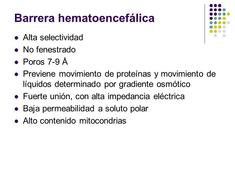 Barrera hematoencefálica Alta selectividad No fenestrado Poros 7-9 Å Previene movimiento de proteínas y movimiento de líquidos determinado por gradien