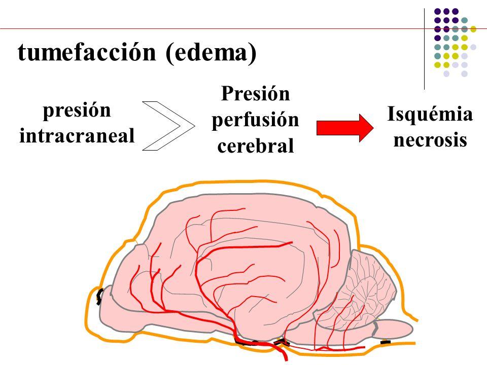tumefacción (edema) presión intracraneal Presión perfusión cerebral Isquémia necrosis