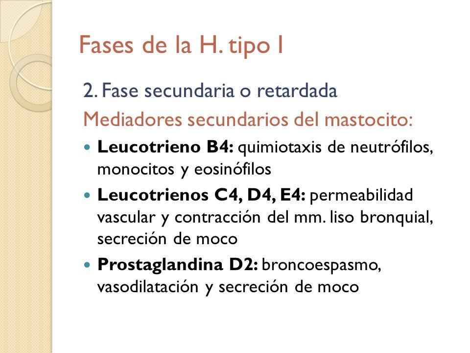 Fases de la H. tipo I 2. Fase secundaria o retardada Mediadores secundarios del mastocito: Leucotrieno B4: quimiotaxis de neutrófilos, monocitos y eos