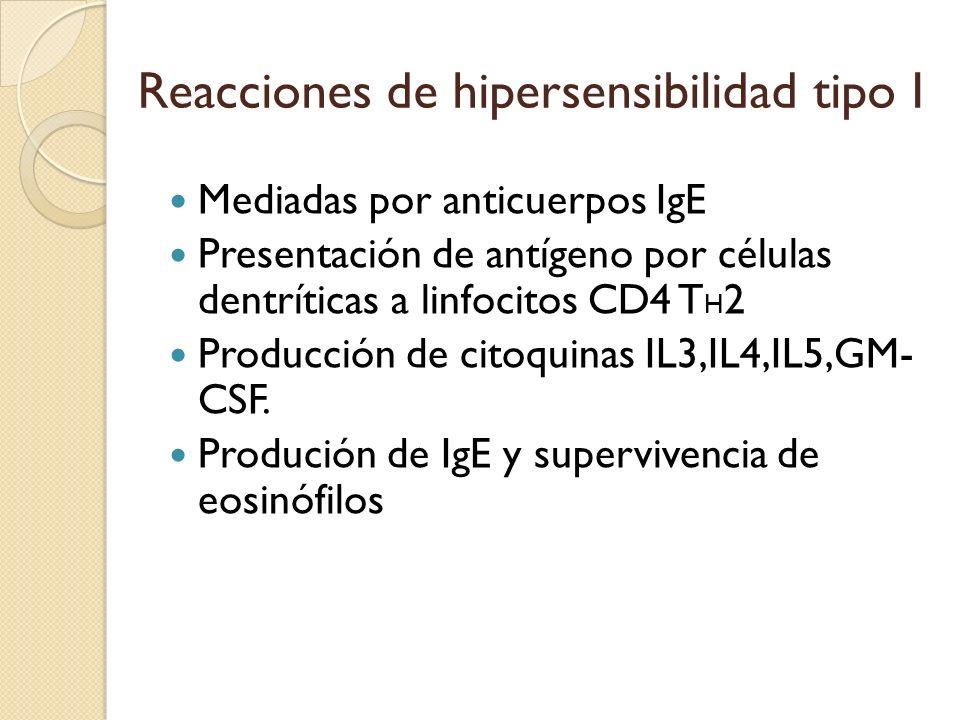 Reacciones de hipersensibilidad tipo I Mediadas por anticuerpos IgE Presentación de antígeno por células dentríticas a linfocitos CD4 T H 2 Producción