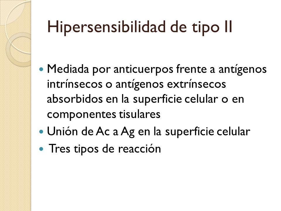 Hipersensibilidad de tipo II Mediada por anticuerpos frente a antígenos intrínsecos o antígenos extrínsecos absorbidos en la superficie celular o en c
