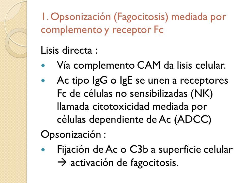 1. Opsonización (Fagocitosis) mediada por complemento y receptor Fc Lisis directa : Vía complemento CAM da lisis celular. Ac tipo IgG o IgE se unen a