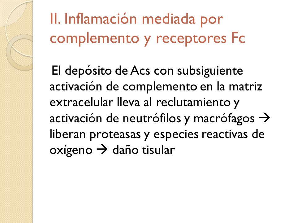II. Inflamación mediada por complemento y receptores Fc El depósito de Acs con subsiguiente activación de complemento en la matriz extracelular lleva
