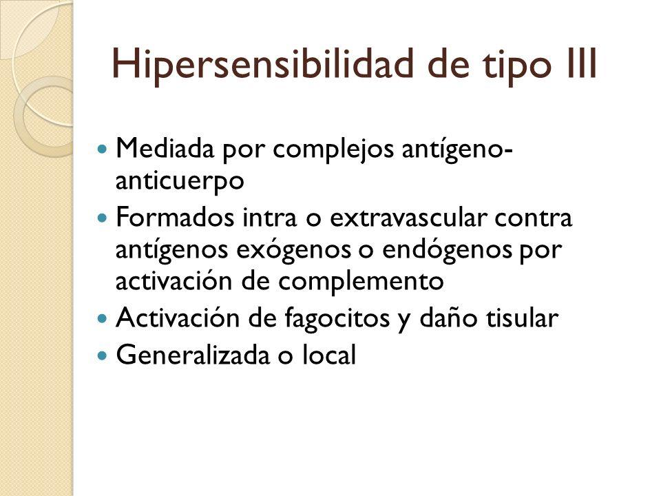 Hipersensibilidad de tipo III Mediada por complejos antígeno- anticuerpo Formados intra o extravascular contra antígenos exógenos o endógenos por acti