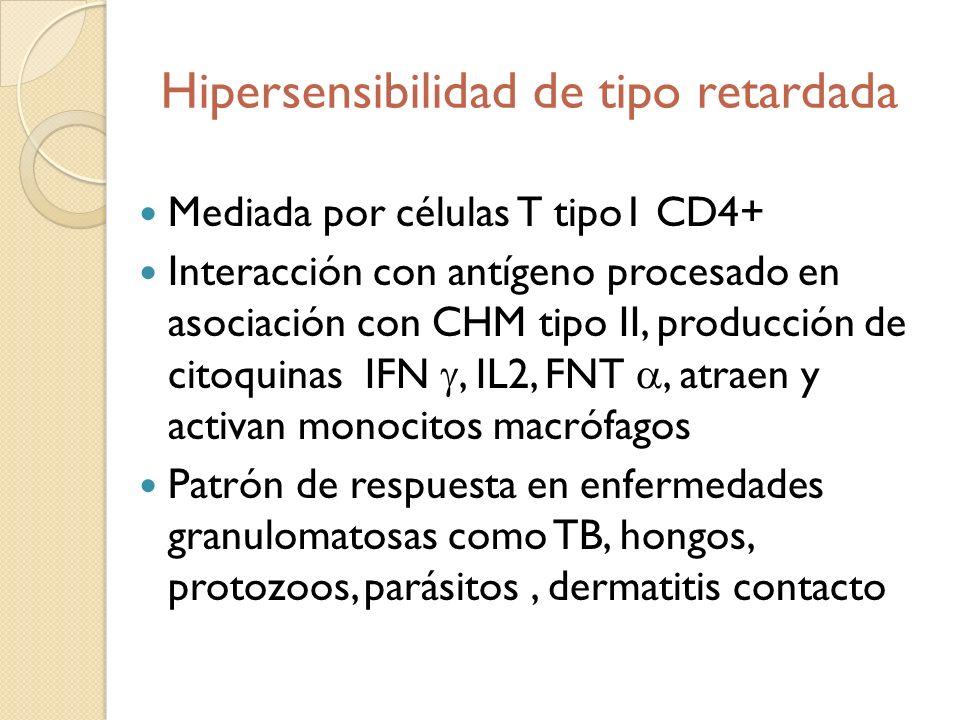 Hipersensibilidad de tipo retardada Mediada por células T tipo1 CD4+ Interacción con antígeno procesado en asociación con CHM tipo II, producción de c