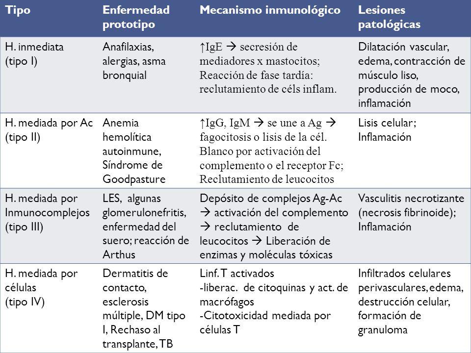 Reacciones de hipersensibilidad TipoEnfermedad prototipo Mecanismo inmunológicoLesiones patológicas H. inmediata (tipo I) Anafilaxias, alergias, asma
