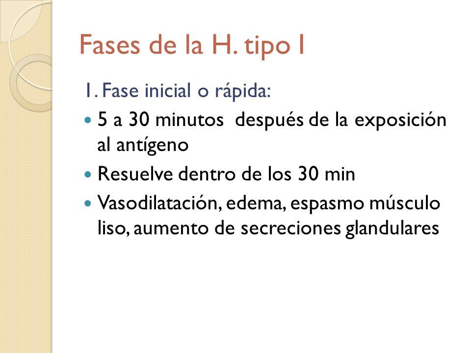 Fases de la H. tipo I 1. Fase inicial o rápida: 5 a 30 minutos después de la exposición al antígeno Resuelve dentro de los 30 min Vasodilatación, edem