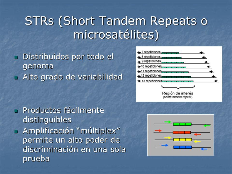 STRs (Short Tandem Repeats o microsatélites) Distribuidos por todo el genoma Distribuidos por todo el genoma Alto grado de variabilidad Alto grado de