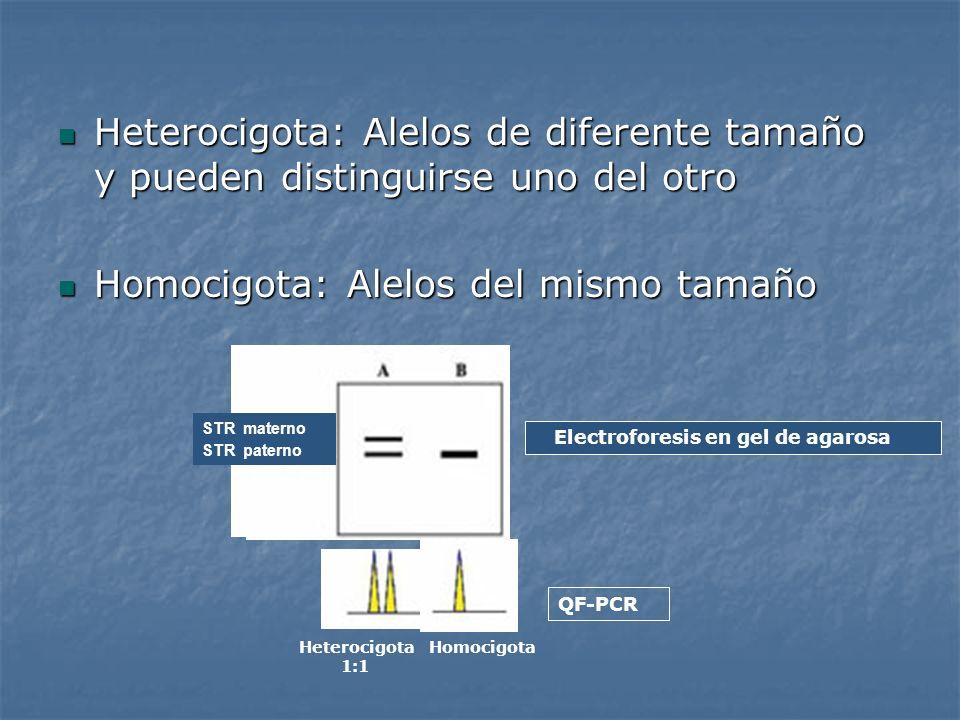 Heterocigota: Alelos de diferente tamaño y pueden distinguirse uno del otro Heterocigota: Alelos de diferente tamaño y pueden distinguirse uno del otr