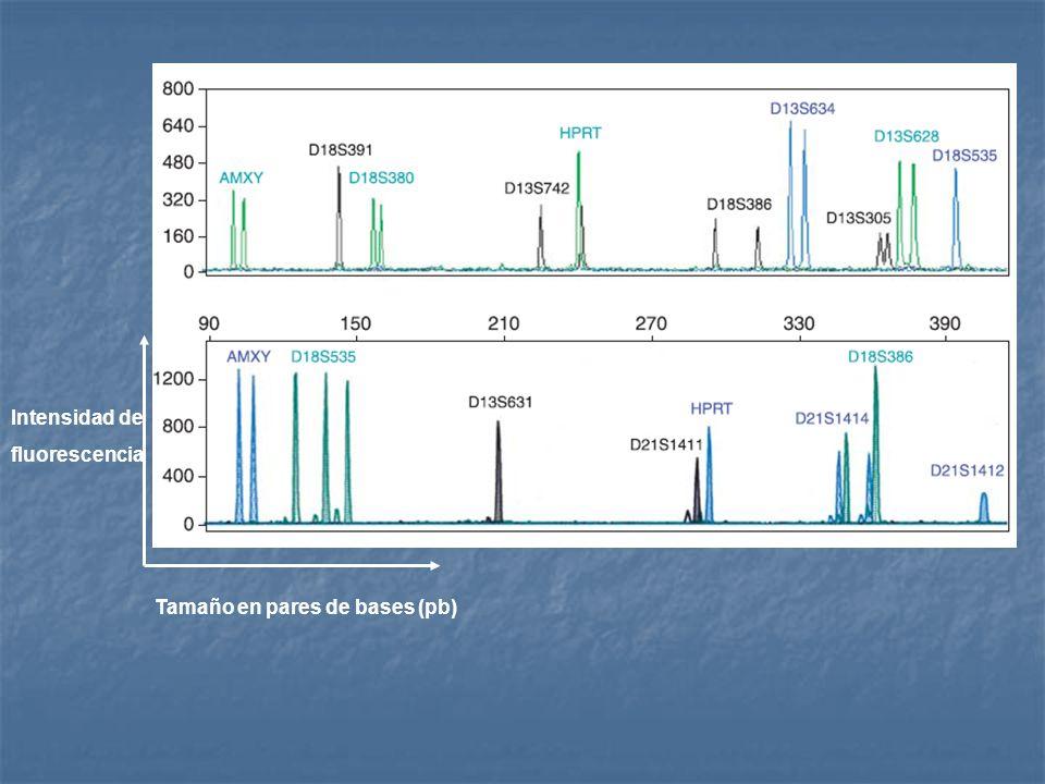Tamaño en pares de bases (pb) Intensidad de fluorescencia