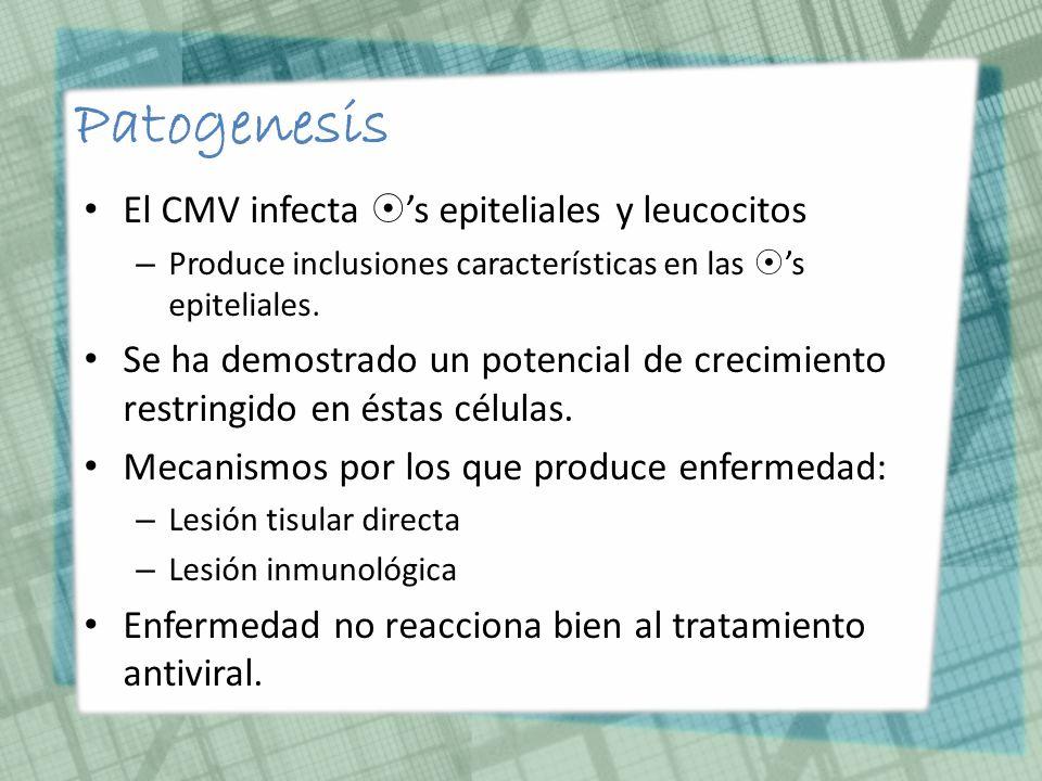Epidemiología EBV se cultiva a partir de saliva de 10-20% de adultos sanos.