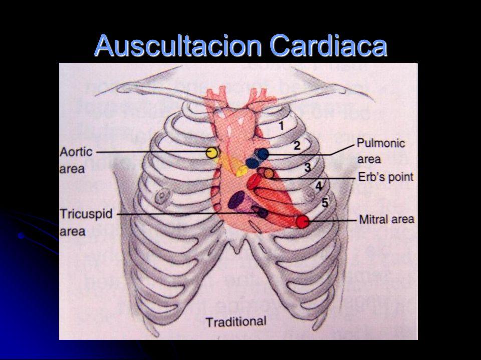 Auscultación Cardiovascular Ruidos Cardiacos y Soplos Dr. Mario González Casafont Especialista en Geriatría y Gerontología Master en Fisiología y Medi