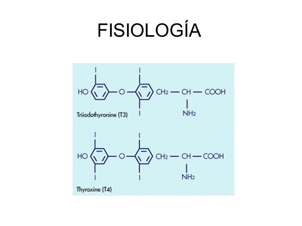 HIPERTIROIDISMO Fármacos Anti-tiroideos Yodo radiactivo 131 I Vida media de 8 días.