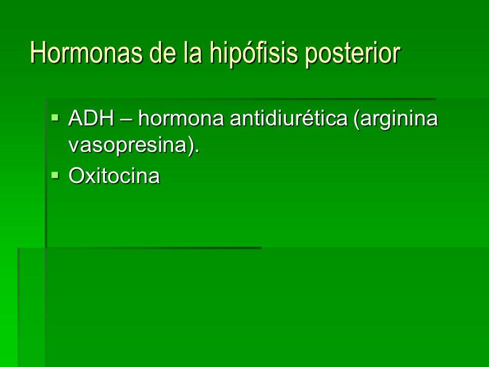 Hormonas de la hipófisis posterior ADH – hormona antidiurética (arginina vasopresina). ADH – hormona antidiurética (arginina vasopresina). Oxitocina O