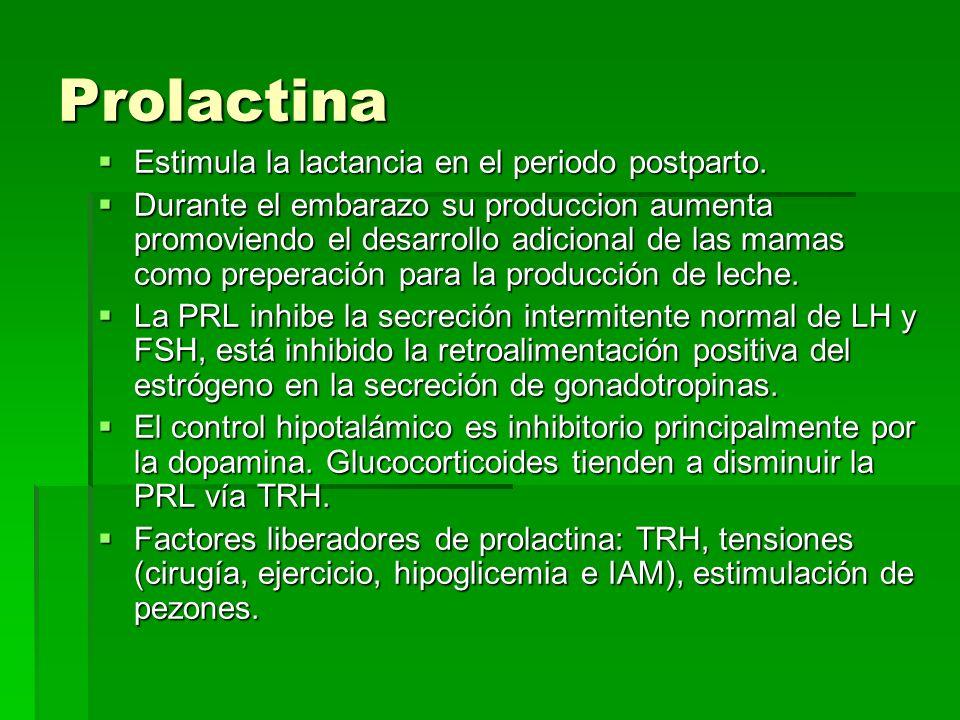 Prolactina Estimula la lactancia en el periodo postparto. Estimula la lactancia en el periodo postparto. Durante el embarazo su produccion aumenta pro