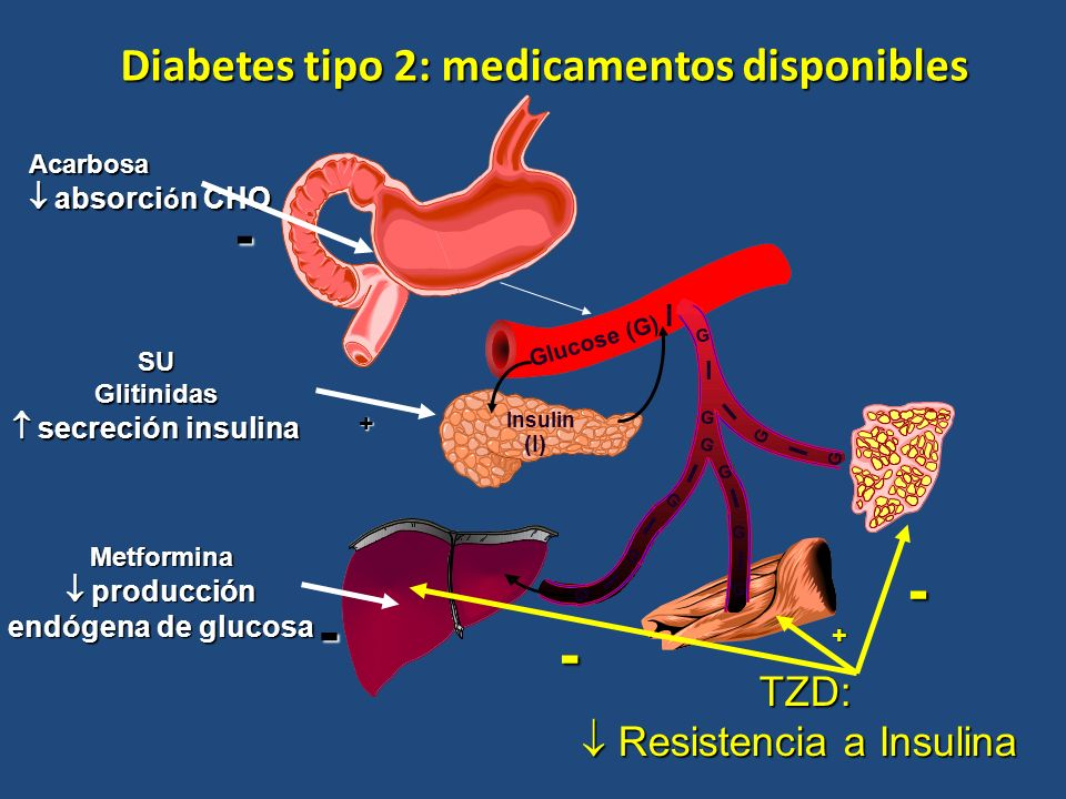 Decreased hepatic glucose output Increased peripheral glucose uptake GI tract Active GLP-1 and GIP Release of incretin gut hormones Pancreas Blood glucose control Incretins Regulate Glucose Homeostasis Through Effects on Islet Cell Function Glucagon in glucose dependent way from alpha cells (GLP-1) Alpha cells Insulin in glucose dependent way from beta cells (GLP-1 and GIP) Beta cells DPP-4* Inhibitor Ingestion of food Adapted from Brubaker PL, Drucker DJ.