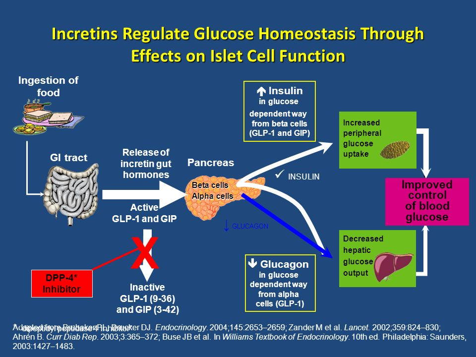 Decreased hepatic glucose output Increased peripheral glucose uptake GI tract Active GLP-1 and GIP Release of incretin gut hormones Pancreas Blood glu