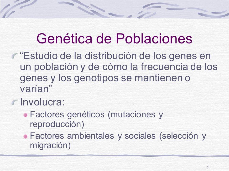 3 Genética de Poblaciones Estudio de la distribución de los genes en un población y de cómo la frecuencia de los genes y los genotipos se mantienen o