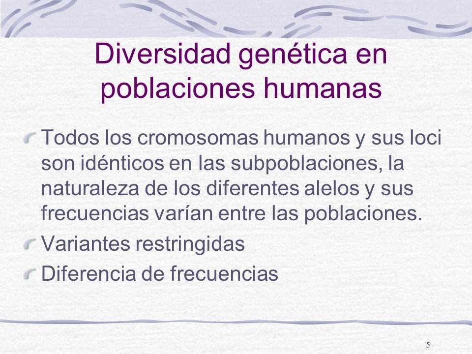 5 Diversidad genética en poblaciones humanas Todos los cromosomas humanos y sus loci son idénticos en las subpoblaciones, la naturaleza de los diferen