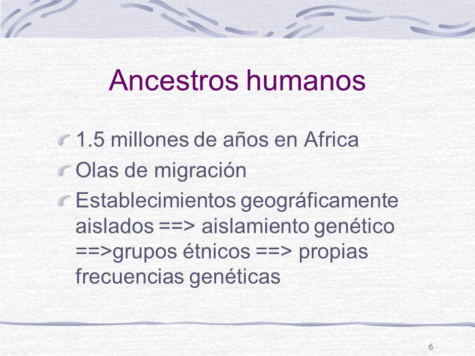 6 Ancestros humanos 1.5 millones de años en Africa Olas de migración Establecimientos geográficamente aislados ==> aislamiento genético ==>grupos étni