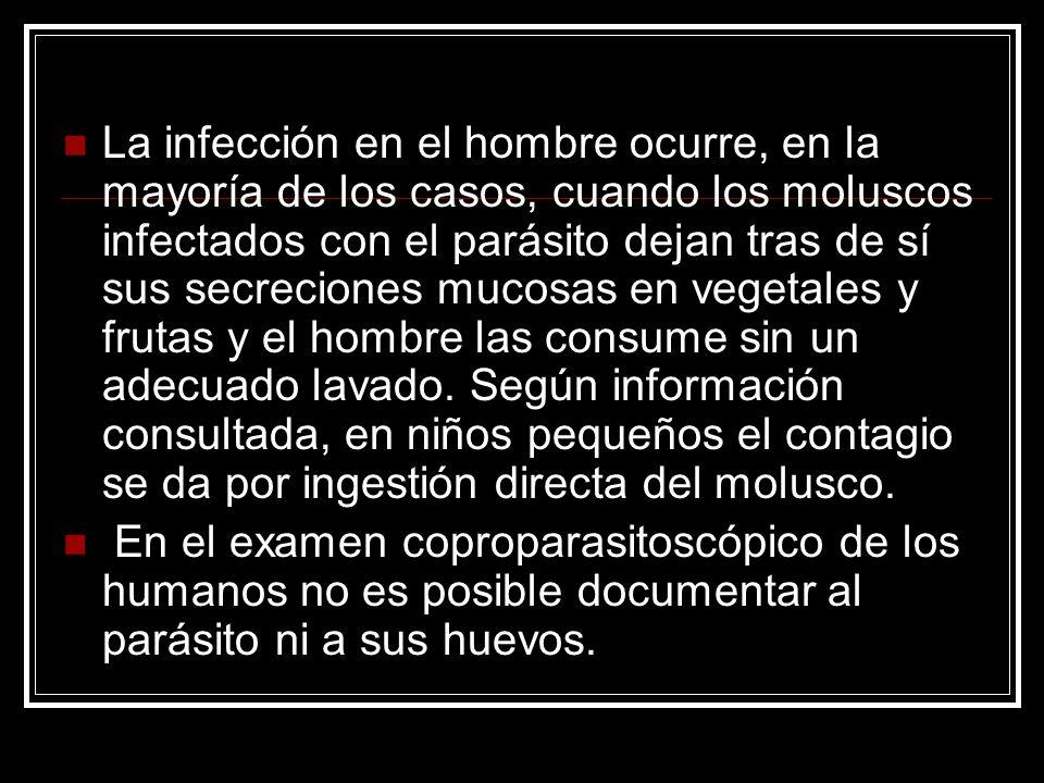 La infección en el hombre ocurre, en la mayoría de los casos, cuando los moluscos infectados con el parásito dejan tras de sí sus secreciones mucosas