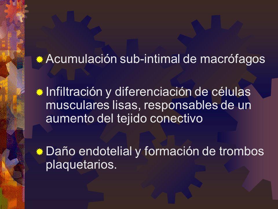 Acumulación sub-intimal de macrófagos Infiltración y diferenciación de células musculares lisas, responsables de un aumento del tejido conectivo Daño endotelial y formación de trombos plaquetarios.
