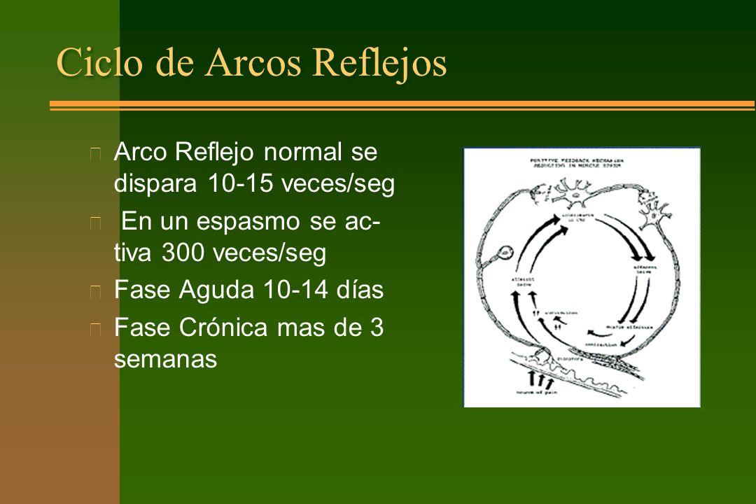 Ciclo de Arcos Reflejos n Arco Reflejo normal se dispara 10-15 veces/seg n En un espasmo se ac- tiva 300 veces/seg n Fase Aguda 10-14 días n Fase Crón