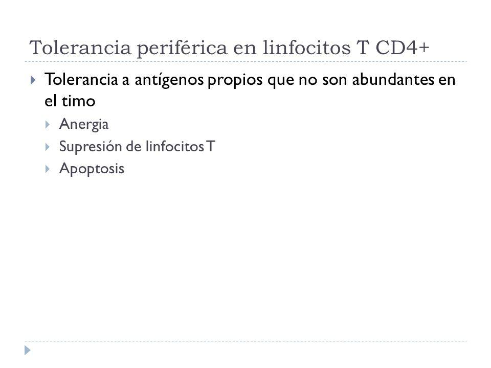 Tolerancia periférica en linfocitos T CD4+ Tolerancia a antígenos propios que no son abundantes en el timo Anergia Supresión de linfocitos T Apoptosis