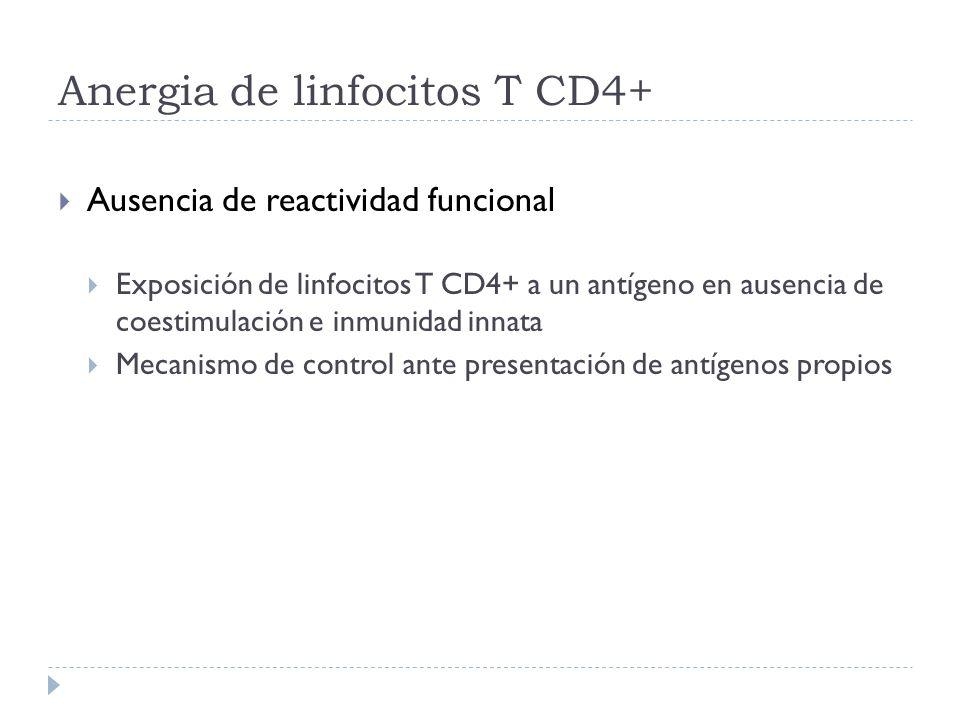 Anergia de linfocitos T CD4+ Ausencia de reactividad funcional Exposición de linfocitos T CD4+ a un antígeno en ausencia de coestimulación e inmunidad