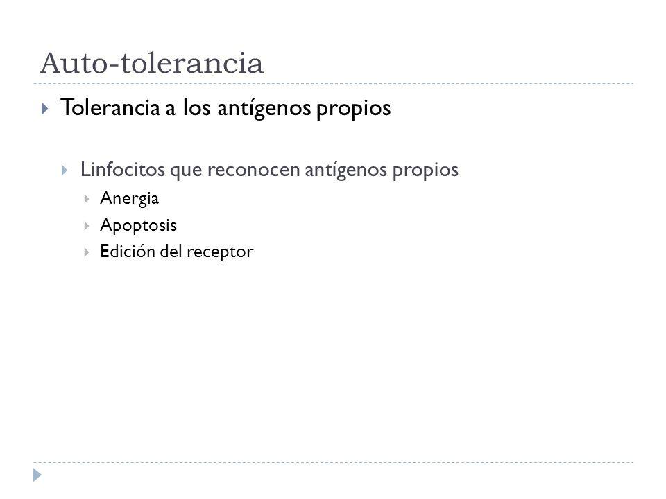 Auto-tolerancia Tolerancia a los antígenos propios Linfocitos que reconocen antígenos propios Anergia Apoptosis Edición del receptor
