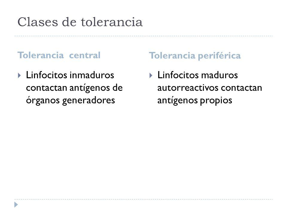 Clases de tolerancia Tolerancia central Tolerancia periférica Linfocitos inmaduros contactan antígenos de órganos generadores Linfocitos maduros autor