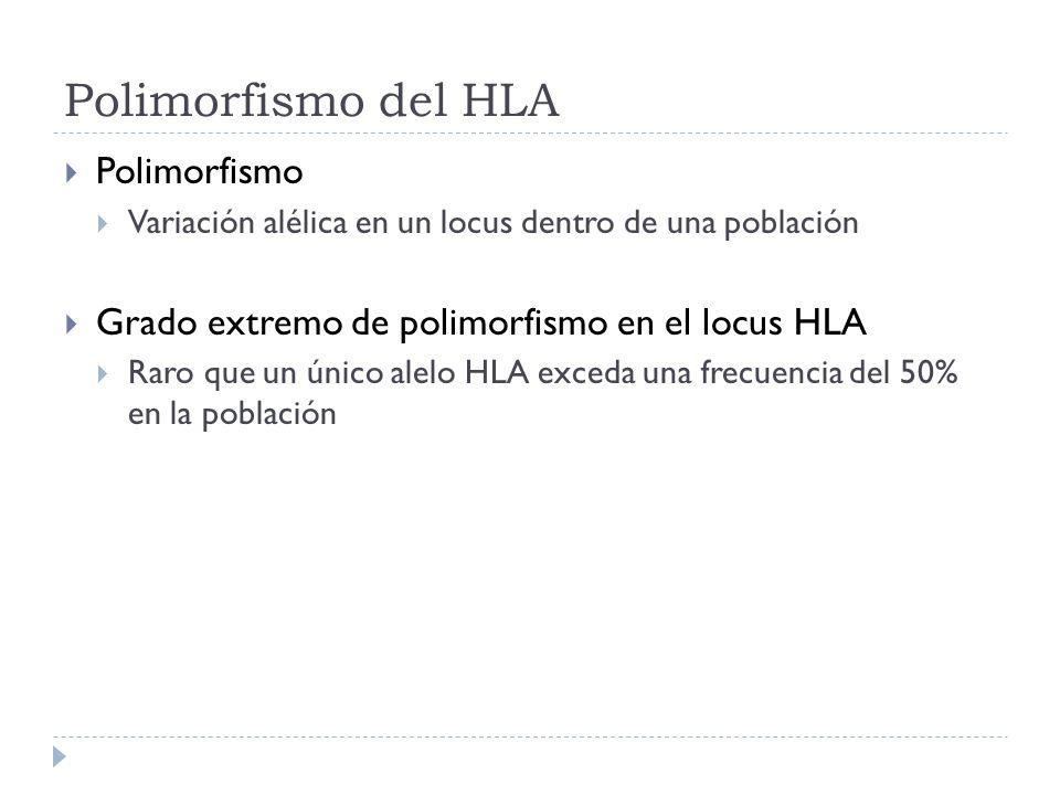 Polimorfismo del HLA Polimorfismo Variación alélica en un locus dentro de una población Grado extremo de polimorfismo en el locus HLA Raro que un únic