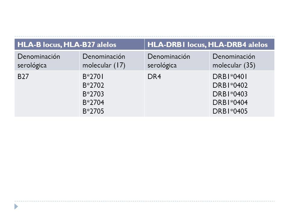 HLA-B locus, HLA-B27 alelosHLA-DRB1 locus, HLA-DRB4 alelos Denominación serológica Denominación molecular (17) Denominación serológica Denominación mo