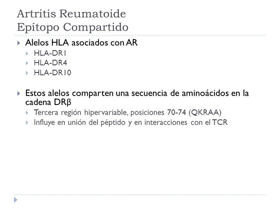 Artritis Reumatoide Epítopo Compartido Alelos HLA asociados con AR HLA-DR1 HLA-DR4 HLA-DR10 Estos alelos comparten una secuencia de aminoácidos en la
